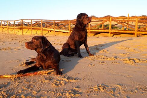 Hond mee naar Spanje