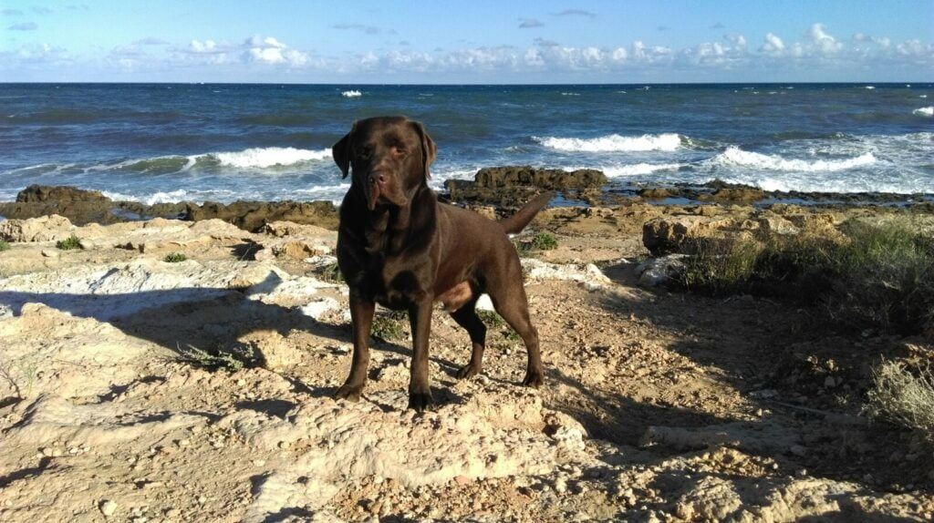 James 2015 mooiste hond in Spanje